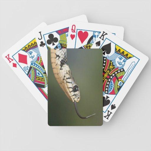 Grass Snake Poker Cards