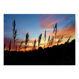 Grass Standing Tall – Early Morning Sunrise Card