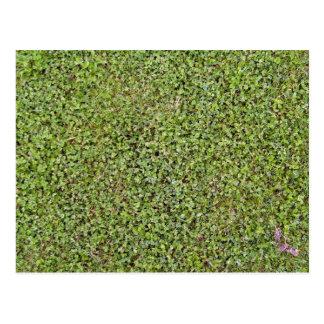 Grass Texture Of A Fresh Cut Lawn Postcard