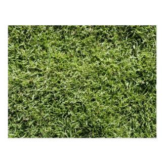 Grass Texture Postcard