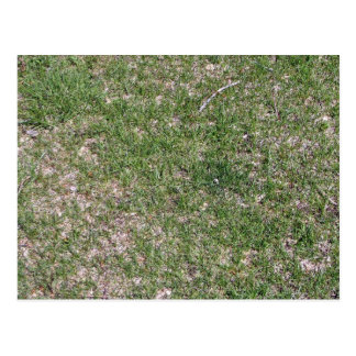 Grass Textures and Pattern Postcard
