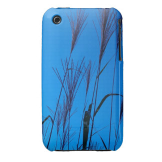 grasses against the summer sky iPhone 3 cases