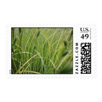 Grasses and reeds postage stamps