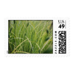 Grasses and reeds stamps