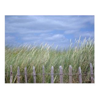 GRASSES AT DAWLISH WARREN POSTCARD