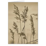 Grasses Note Card