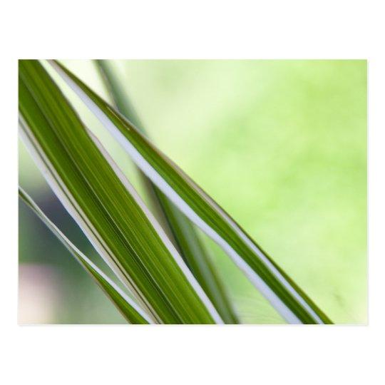 Grasses Postcard