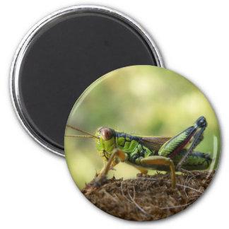 Grasshopper 2 Inch Round Magnet