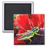 Grasshopper 2 Inch Square Magnet