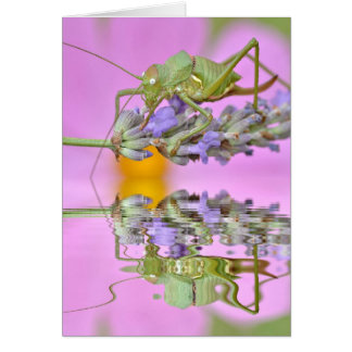 Grasshopper above water with reflection card
