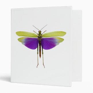 Grasshopper Caelifères Locust Titanacris Albipes Binder