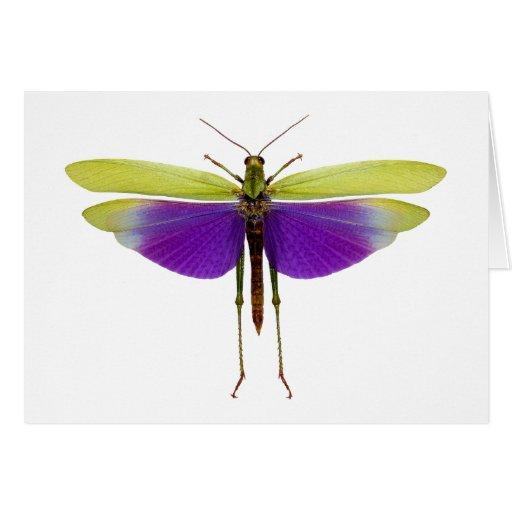 Grasshopper Caelifères Locust Titanacris Albipes Greeting Card