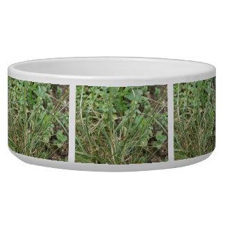 Grasshopper Camouflage Dog Bowl