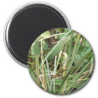 Grasshopper Camouflage Magnet