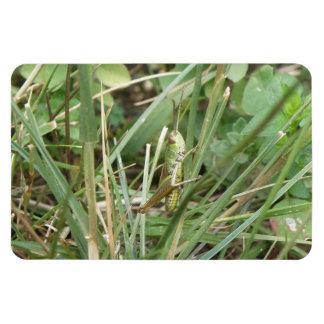 Grasshopper Camouflage Premium Magnet