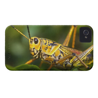 Grasshopper, Everglades National Park, Florida, iPhone 4 Case-Mate Case