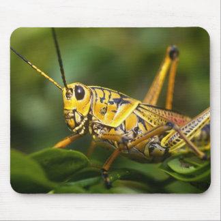 Grasshopper, Everglades National Park, Florida, Mouse Pad