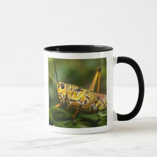 Grasshopper, Everglades National Park, Florida, Mug