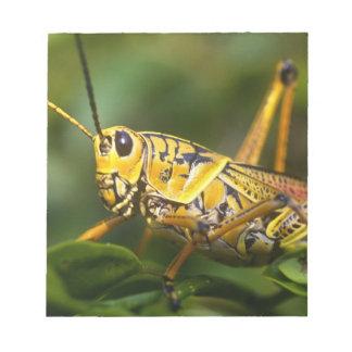 Grasshopper, Everglades National Park, Florida, Note Pads