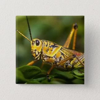 Grasshopper, Everglades National Park, Florida, Pinback Button