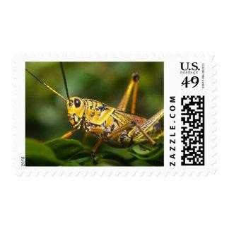 Grasshopper, Everglades National Park, Florida, Stamps