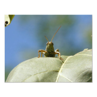 grasshopper front view card