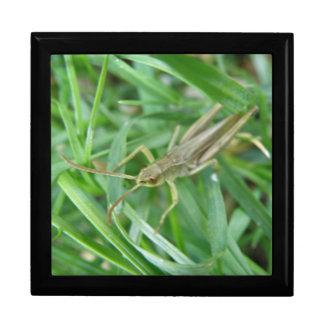 Grasshopper Gift Box