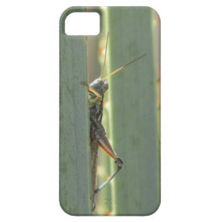 Grasshopper iPhone 5 Case