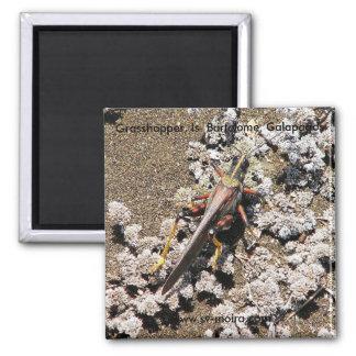 Grasshopper, Isla Bartolome, Galapagos 2 Inch Square Magnet