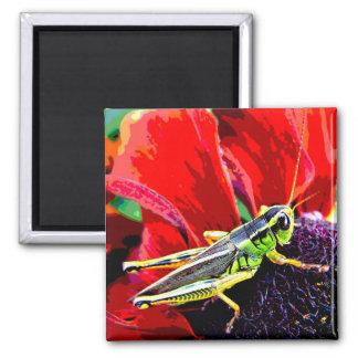 Grasshopper Magnets