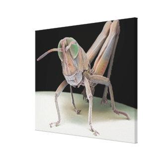 Grasshopper nymph gallery wrap canvas