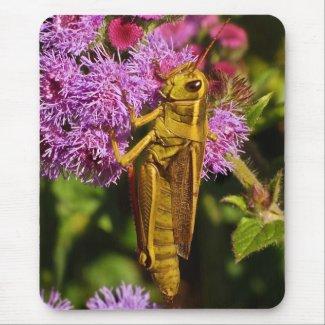 Grasshopper on Ageratum Mouse Pad