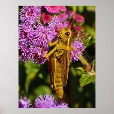 Grasshopper on Ageratum Poster