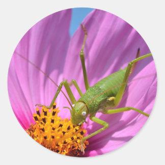 Grasshopper on cosmos flower classic round sticker