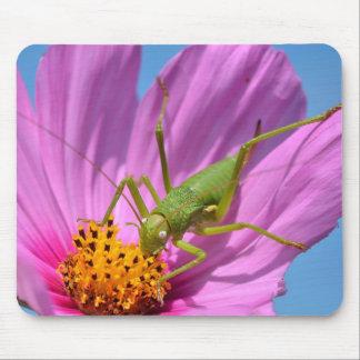 Grasshopper on cosmos flower mousepad