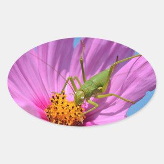 Grasshopper on cosmos flower oval sticker