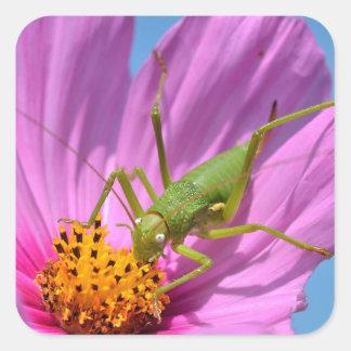 Grasshopper on cosmos flower square sticker