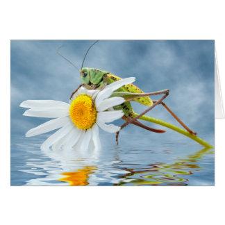 Grasshopper on daisy flower card