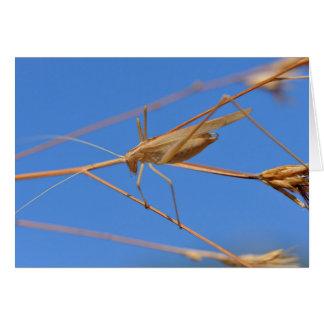 Grasshopper on grass card