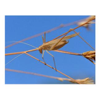 Grasshopper on grass postcard