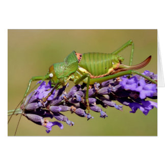 Grasshopper on lavender flower card