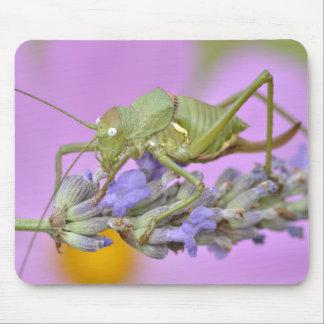 Grasshopper on lavender flower mousepad