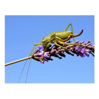 Grasshopper on lavender flower postcard