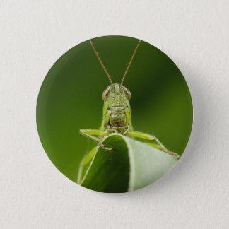 Grasshopper on Leaf, Grasshopper Face Close-up Button