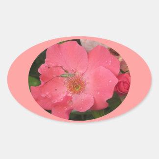 Grasshopper on Pink Rose Oval Sticker