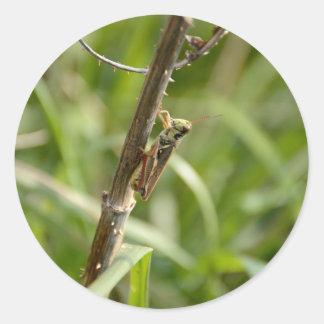 Grasshopper on the Stick Classic Round Sticker