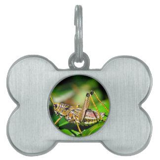 Grasshopper Pet Name Tag