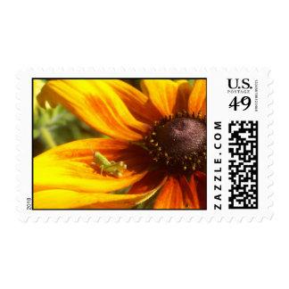 Grasshopper Postage Stamps