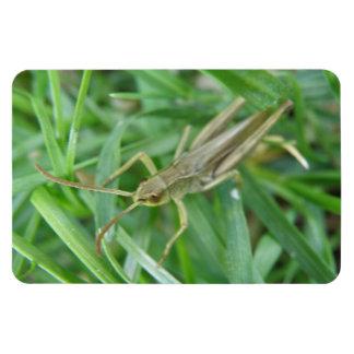 Grasshopper Premium Magnet