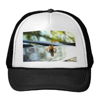 grasshopper stand off trucker hat